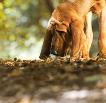 Hunde Futterproben bei happydog kostenlos bestellen