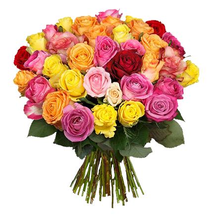 [Blume Ideal] 28 Rosen | 19,94 Euro inkl. Versand