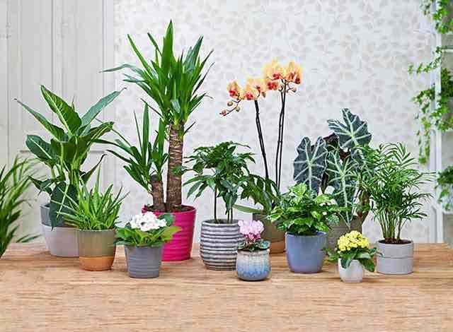 30% bei Baldur-Garten auf den teuersten Artikel