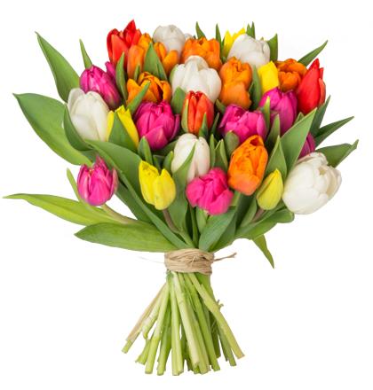 [Blume Ideal] 38 Tulpen verschiedene Farben - Wunsch Liefertermin -