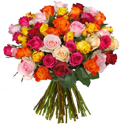 Blume Ideal Angebot: 37 Rosen EXTRA-LARGE  -------- ( + ggf. 9% Shoop Cashback )