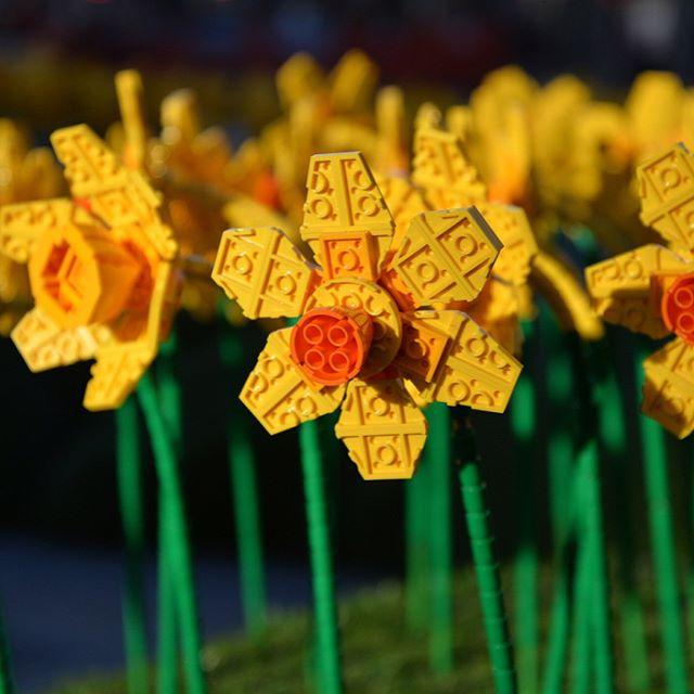 LEGO Technic, Creator & City 13% reduziert bei Galeria Kaufhof - z.B. Creator Stadtleben 10255 für 209 €