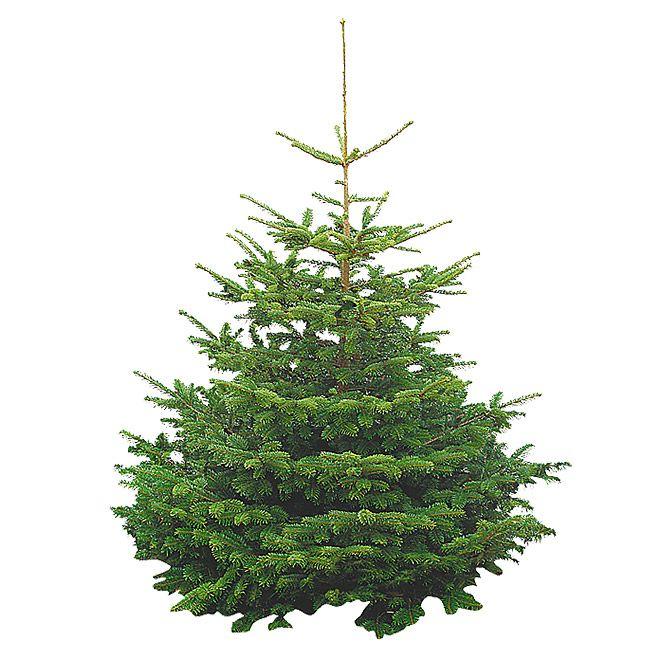 weihnachtsbaum nordmanntanne bei bauhaus 125 150cm plus 4. Black Bedroom Furniture Sets. Home Design Ideas