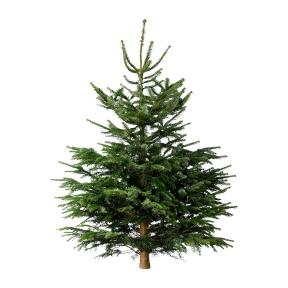 Weihnachtsbaum bei aldi nord s d ab don nordmanntanne 150 175 cm christbaum - Aldi weihnachtsbaum ...