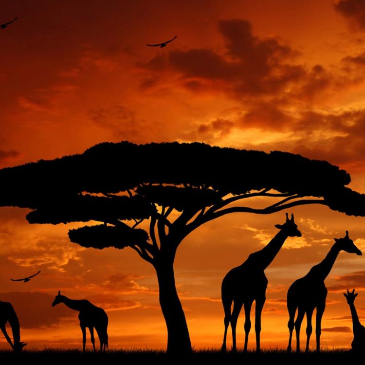 flug frankfurt kenia mombasa return 13 20 tage mit condor ab 260. Black Bedroom Furniture Sets. Home Design Ideas