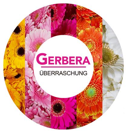 [Blume Ideal] 30 Gerbera | 18,94 Euro inkl. Versand