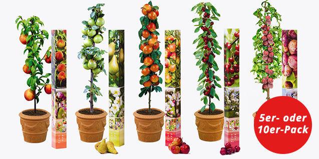 5 Säulenobstbäume: Apfel, Birne, Sauerkirsche, Pflaume und Pfirsich