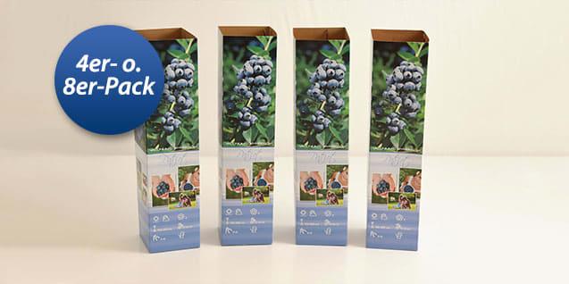 4er- oder 8er-Set Blaubeerpflanzen