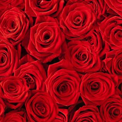20 Red Naomi Rosen inkl. Versand @Miflora *UPDATE*
