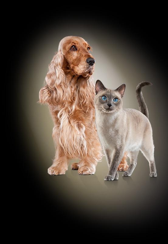Gratis Futterprobe von SELECT GOLD für euren Hund (200 g-Dose) oder eure Katze (85 g-Beutel)