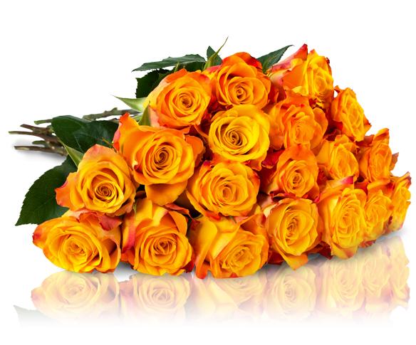 """Rosenstrauß """"Sunny Yellow"""" 22 orange-gelbe Rosen für 18,90€ inkl. Versandkosten bei [Miflora]"""