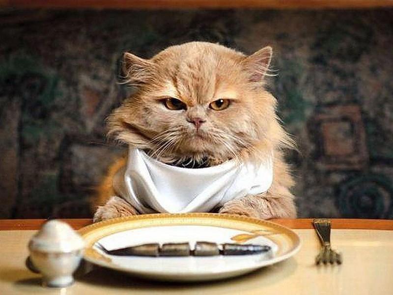 [DailyDeal] 192 Portionen (100g) Whiskas-Katzenfutter für 38,99€