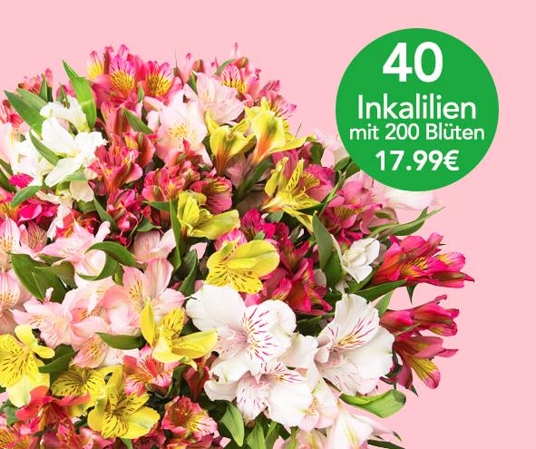 40 bunte Inkalilien mit  200 Blüten für 22,94€ inkl. Versand bei Blume Ideal
