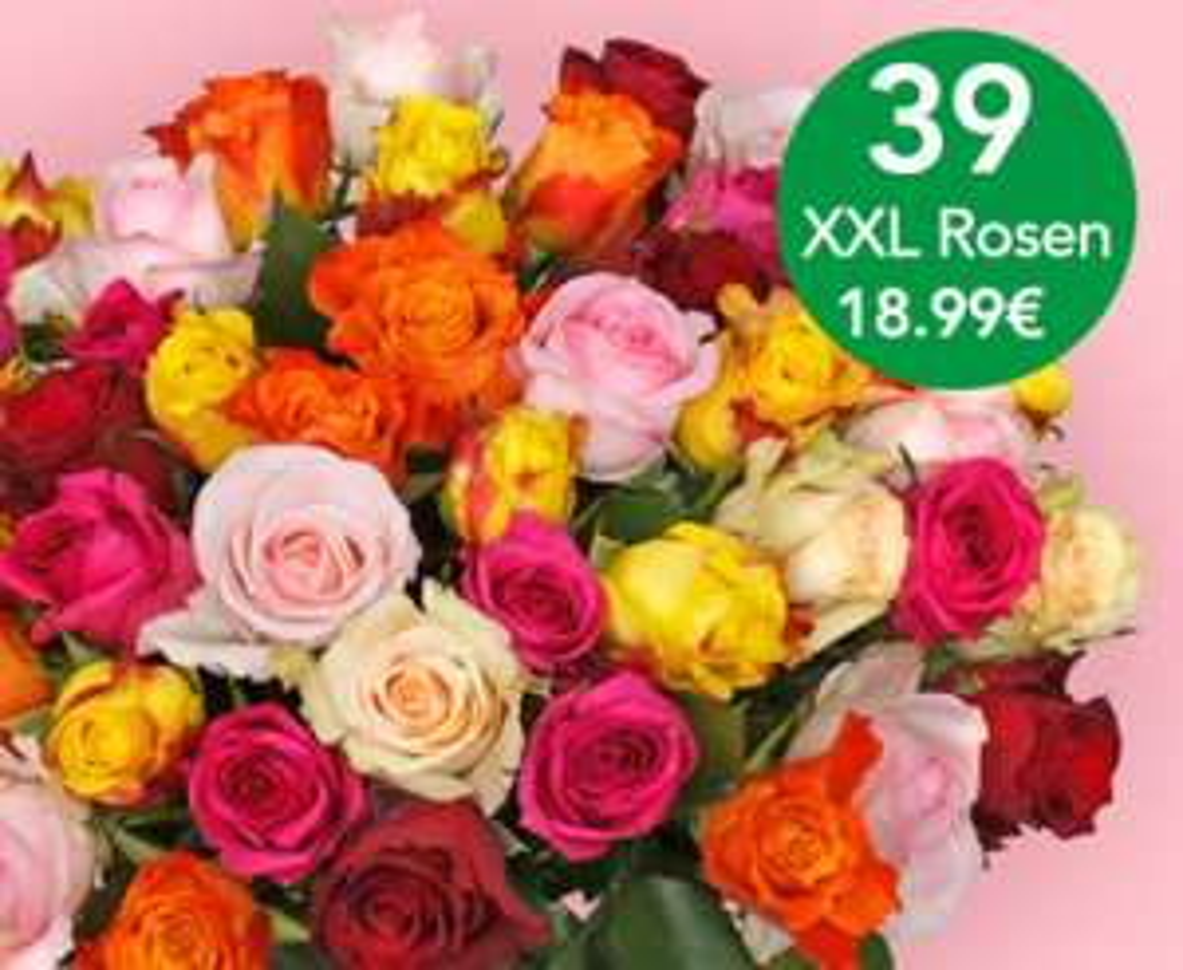 39 XXL Rosen für 18,99€ + 4,95 Versand.