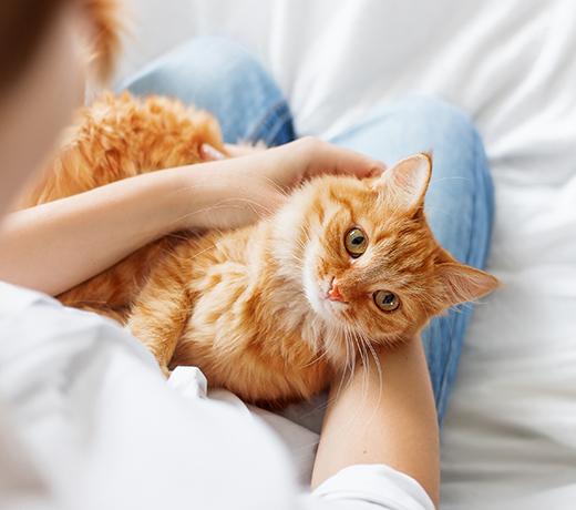 20% Rabatt auf Katzenfutter am Weltkatzentag bei Kölle Zoo und weitere Angebote