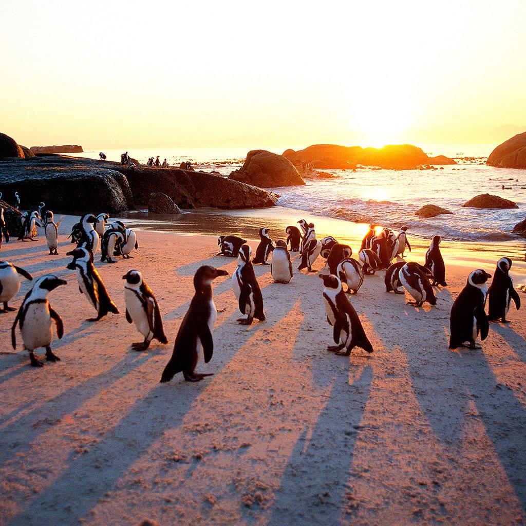 Flüge: Südafrika [Januar - März] - Ab vielen deutschen Airports nach Kapstadt ab nur 388€ Hin- und Rückflug inkl. Gepäck