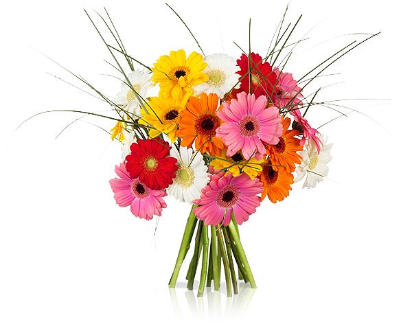 HAPPY COLORS Blumenstrauß - 30 bunte Germini für 16,90€inkl Versandkosten