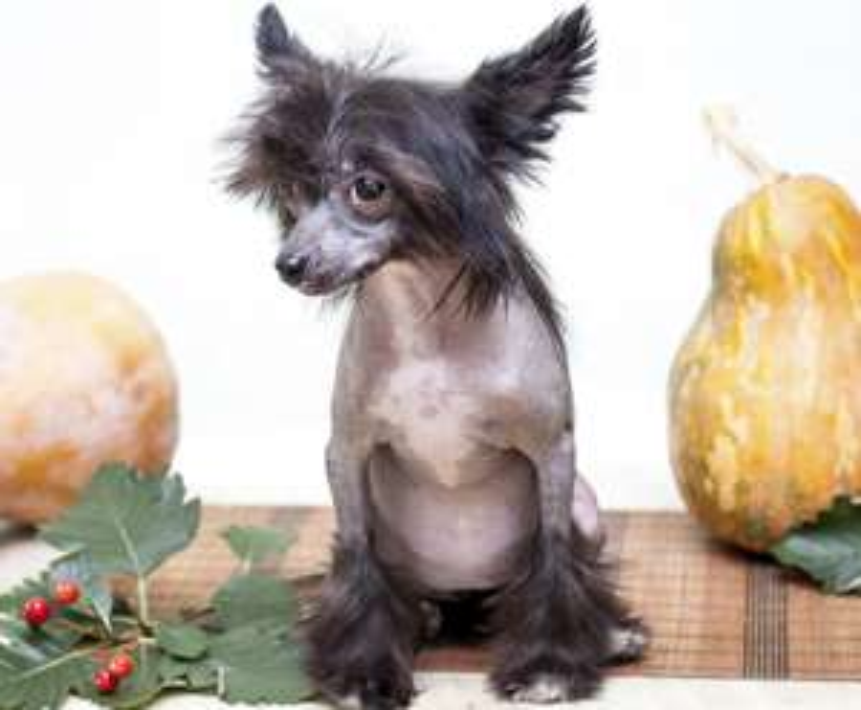 Hundehaartrimmer für 103,39 € bei Plus