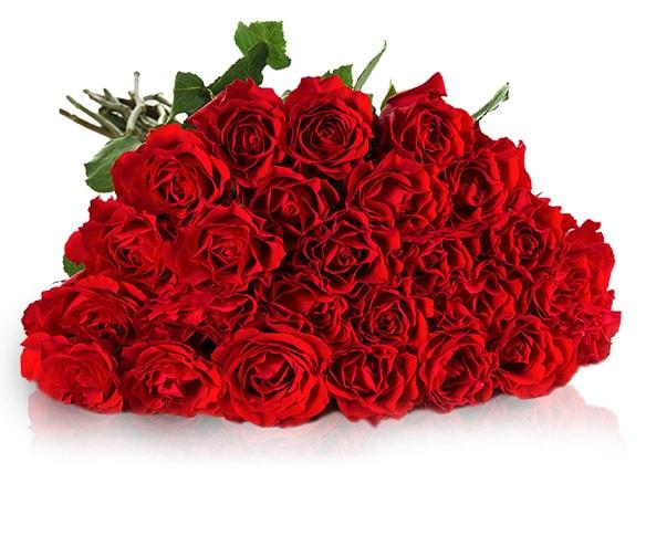 25 rote Rosen mit 50cm Stiellänge = Stückpreis 0,67€