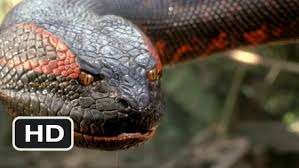 Anaconda kostenlos in HD leihen bei Microsoft