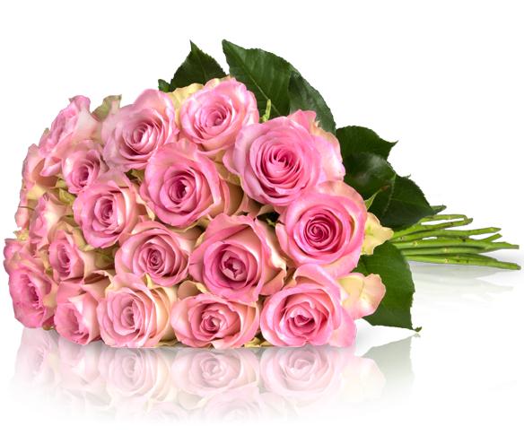20 Rosa Rosen für 18,90€ inkl. Versand bei Miflora
