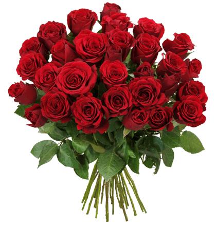 50 rote Rosen mit 50cm Stiellänge für 29,94€ (60 Cent / Rose) + 9% Shoop Cashback [Blume Ideal]