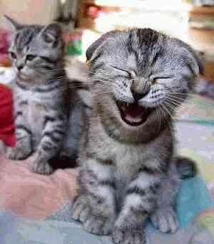 [UPDATE] Happy Cat 3x 50g Katzenfutter [Wieder verfügbar!!]