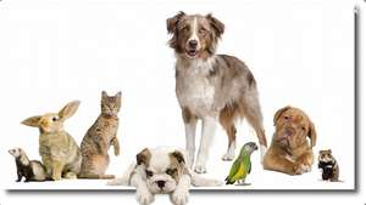 Übersicht der Tierfutterangebote  der KW 43 / 2017 [Bundesweit]