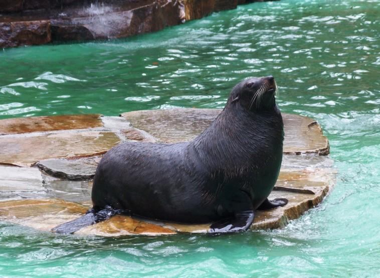 Eintritt in den Dortmunder Zoo ab 1 Cent bis zum 23.12.2017 (LOKAL)