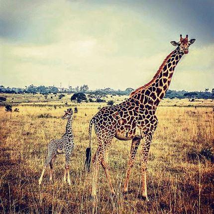 Flüge: Kenia [November - Juni] - Hin- und Rückflug mit KLM und/oder Air France von den meisten deutschen Airports nach Nairobi ab nur 387€ inkl. Gepäck