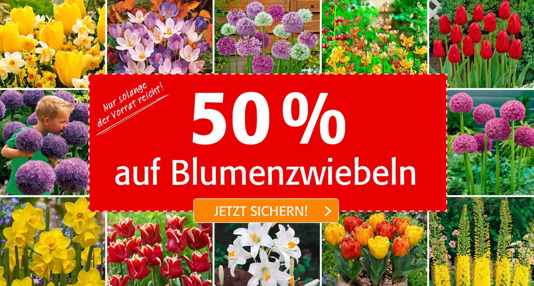 -50% Rabatt auf alle Blumenzwiebeln bei Pötschke.de