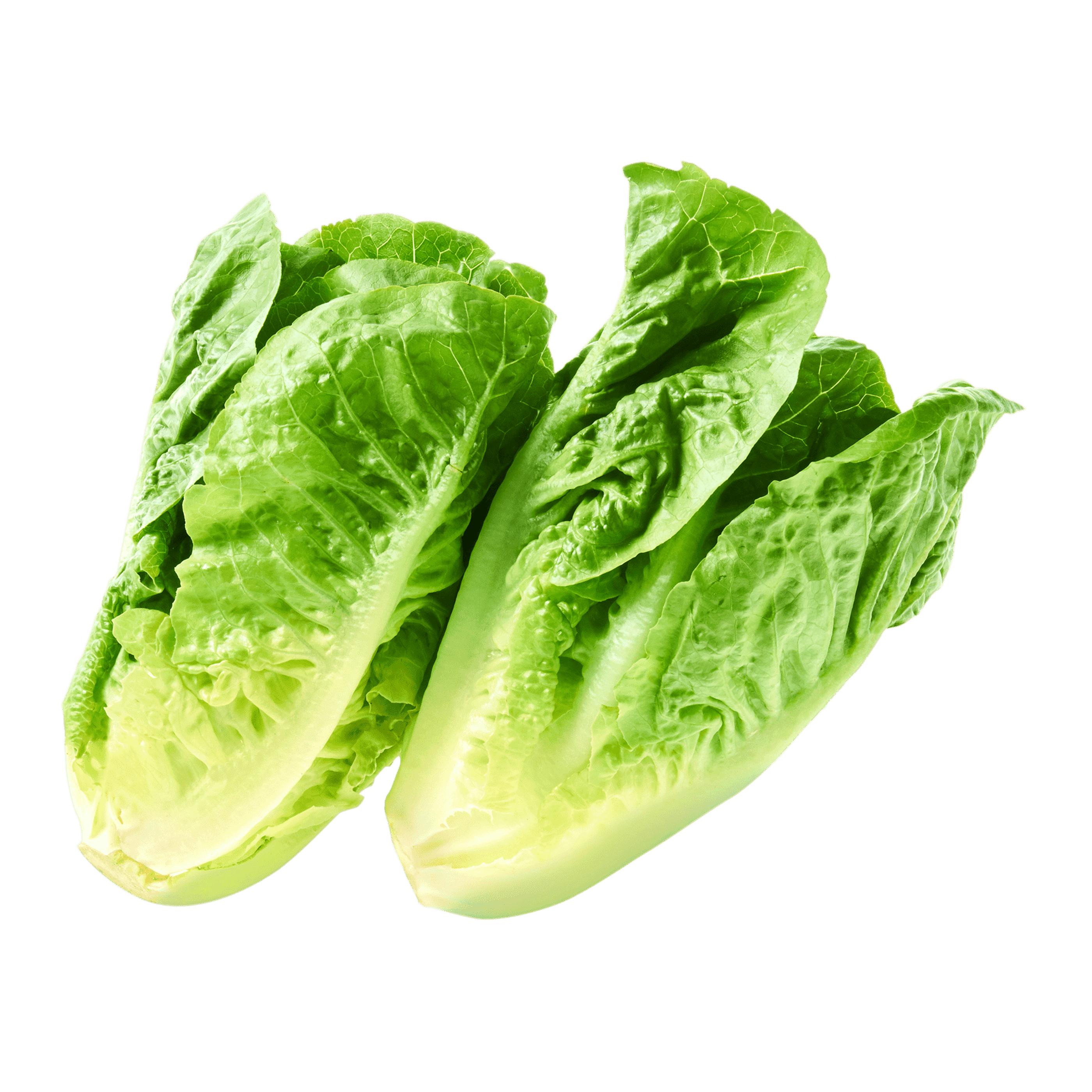 Mini-Romana Salat @ALDI Nord Wochenangebot