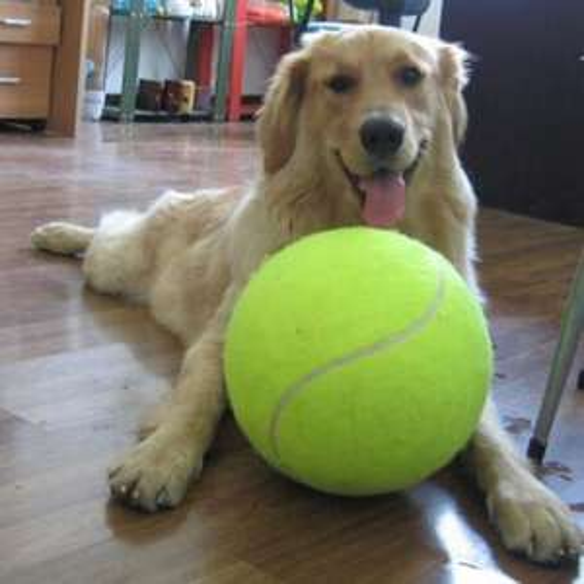 9,5 Zoll Mega Jumbo Spielzeugball für Hund, Katze und Kind.