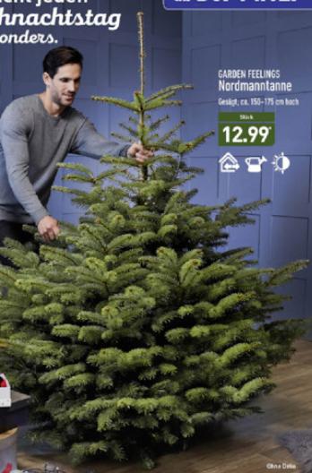 [ALDI Nord] Nordmanntanne 150-175cm für 12,99€ ab 14.12.2017