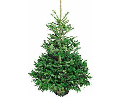 [Volksweihnachtsbaum (Nordmanntanne) 125-150 für 12.99€ ausverkauft]. Aber  *NUR HEUTE* Vsk-freie Bestellungen bei Obi