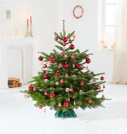 Weihnachten für Faule: 15% Rabatt auf geschmückte Nordmanntannen bei Blume2000