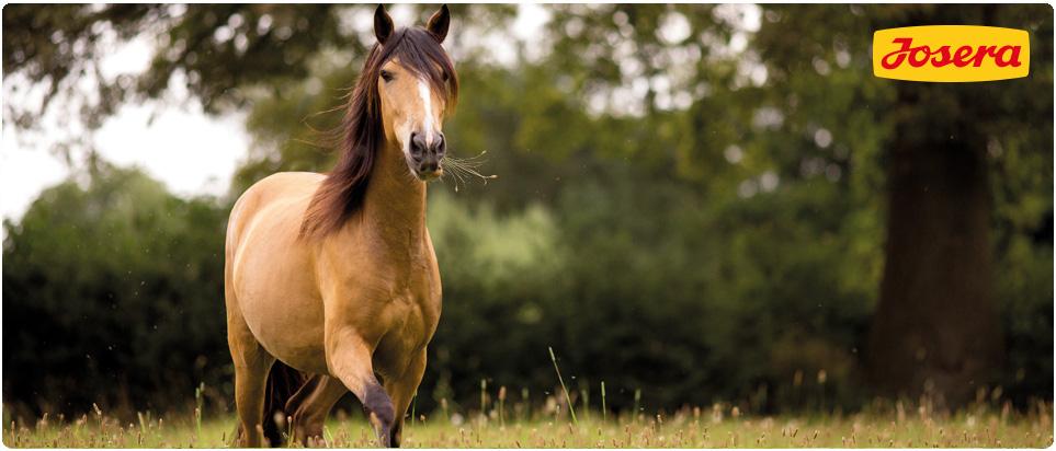 Pferdefutter zum testen oder Spenden von josera oder lexa kostenlos.