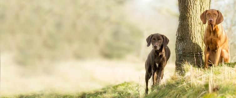 (Shoop) alsa-hundewelt 10% Cashback + 20€ Rabattgutschein ab 69€ Mindestbestellwert