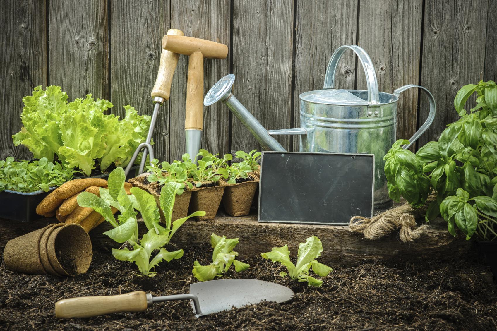 kostenloser Aussaatkalender für den Garten zum Download