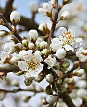 10% Rabattcode bis 7ten März auf Grünpflanzen + 10€ Newlsettergutschein