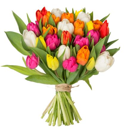41 bunte Tulpen für 17,99€ - mit 7-Tage-Frische-Garantie