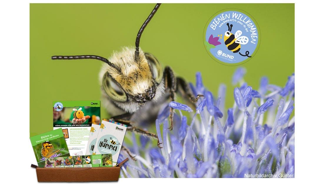 Kostenloses Bienenrettungspaket vom BUND