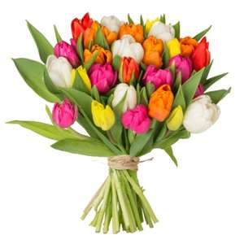 44 bunte Tulpen für 22,98€ inkl. Versand