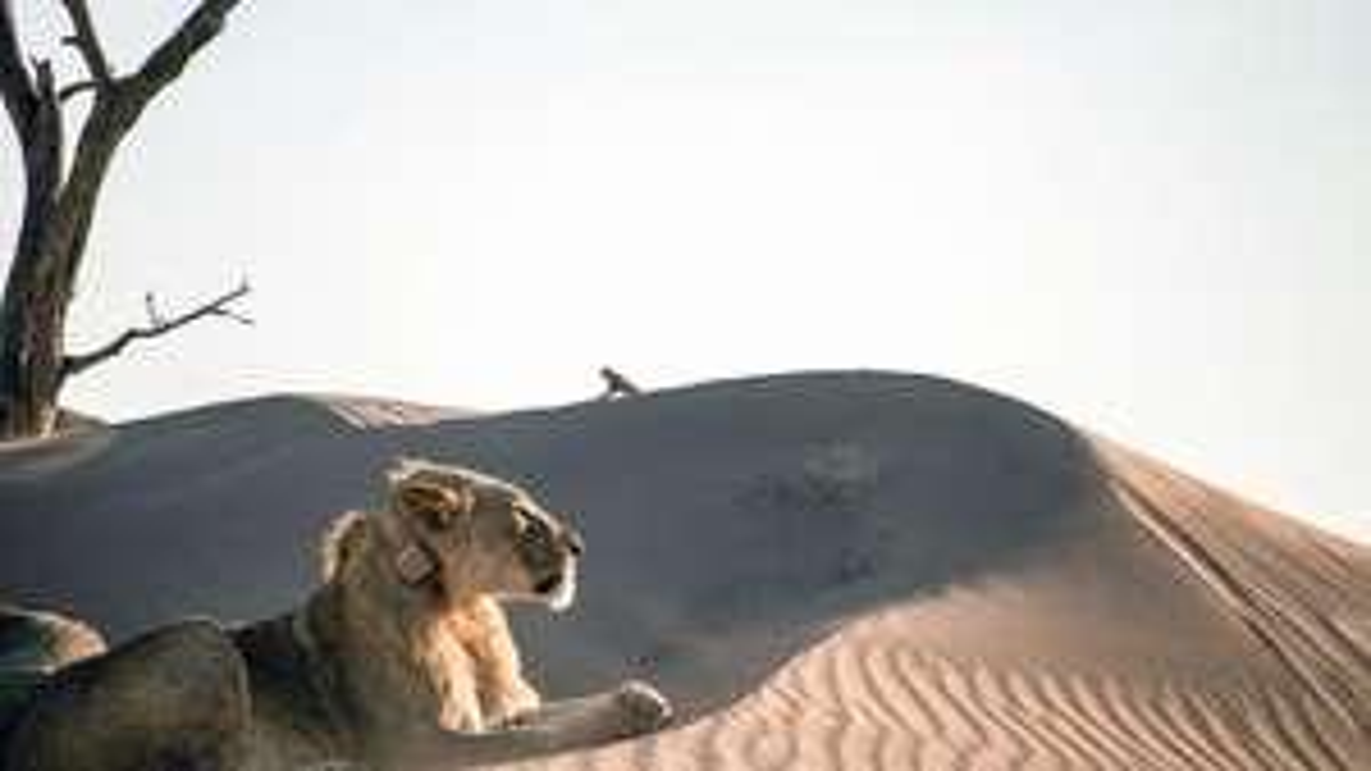Gratis Natur- und Tierdokus (z.B. Vanishing Kings - Desert Lions of the Namib, Wälder unserer Erde, Erlebnis Erde Karibik etc.)