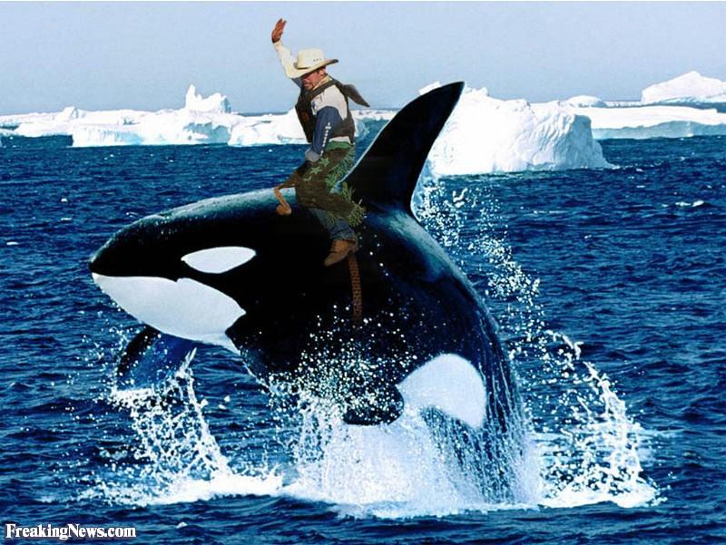 Daily Getaways - USA-Urlaubsdeals: Theme Parks, Hotels, Mietwagen ab 09.April z.B. Sea World für 50$/ 79$,