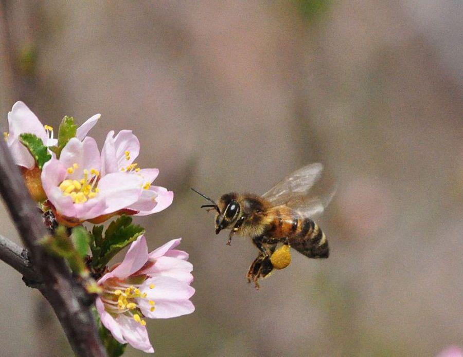 gratis EBook - Bienenweidekatalog