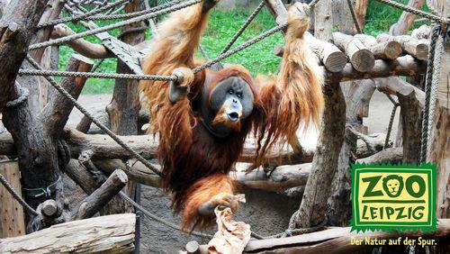 Kostenloser Eintritt mit Hitradio RTL im Zoo Leipzig am 21.4/22.4 für alle bis 16