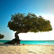 Flüge: ABC Inseln [Mai - Juni] - Hin- und Rückflug von Amsterdam nach Aruba, Bonaire und Curacao ab nur 413€