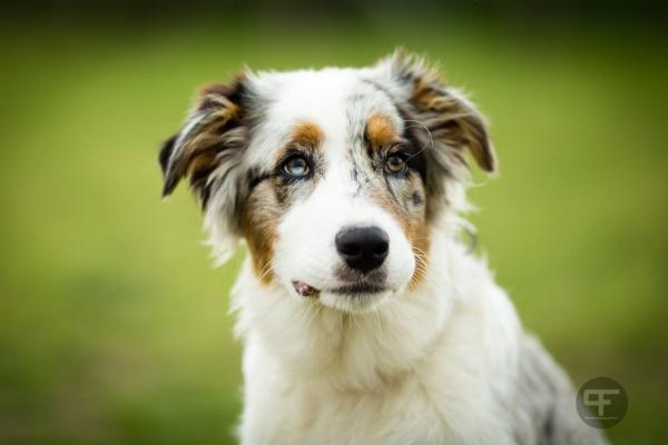 Hundeshooting € 10.- Rabatt (Österreich)