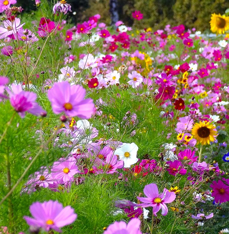 Samenmischungen für bienenfreundliche Blumenflächen an der Schule kostenlos bestellen !
